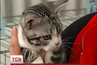 В Киеве проходит чемпионат кошачьей красоты