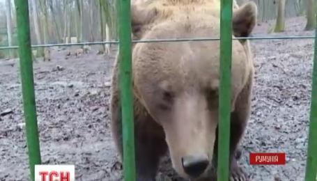 Медведь предсказал Румынии скорое окончание зимы