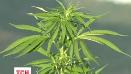 В Чили открыли гигантскую ферму марихуаны