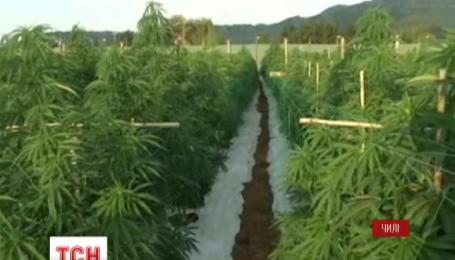В Чили открыли самую большую в мире ферму марихуаны