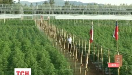 В Чили в 300 километрах от Сантьяго открыли самую большую в мире ферму марихуаны