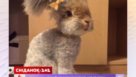 Вухатий кролик Уоллі став зіркою Інтернету