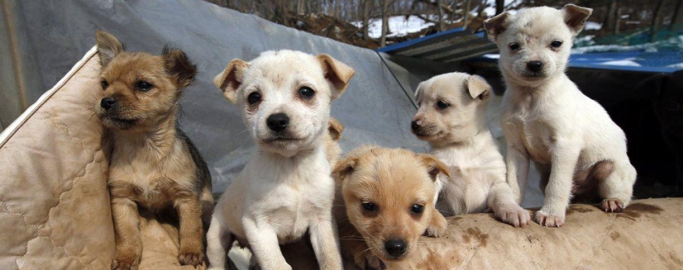 У Південній Кореї жінка понад 20 років рятує собак від перетворення на делікатес
