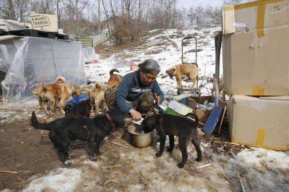 Південна Корея, жінка, собаки