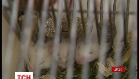 Американские ученые на треть продлили жизнь мышам