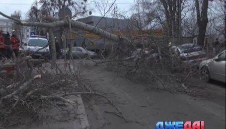 В Киеве дерево упало на припаркованные авто