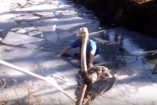 Відео рятувальної операції страуса в американському зоопарку зворушило юзерів