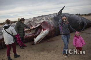 Кровавое побережье: в Британии гиганстких кашалотов режут на куски прямо на берегу