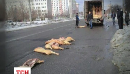 Жителі харківського мікрорайону Рогань сфотографували дорожню пригоду зі свинячими тушами