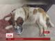 У Чорноморську волонтери збирають гроші на пам'ятник собаці