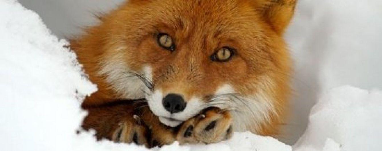 На Волыни зафиксирован рекордный для распространения бешенства год