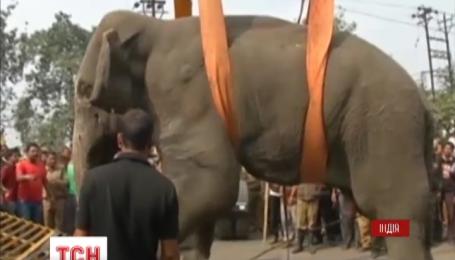 Индийским лесничим удалось поймать слона, который поднял панику накануне