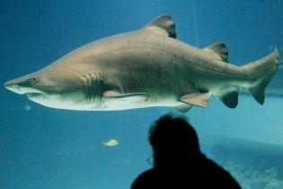 Пользователей шокировало видео жестокой атаки акулы на дайвера