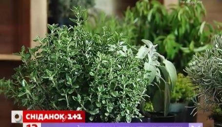 Як на підвіконні виростити смачні і красиві рослини