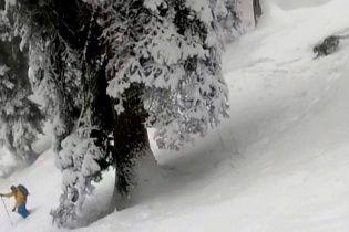 Лыжники сняли на видео опасную встречу со снежным барсом в Индии