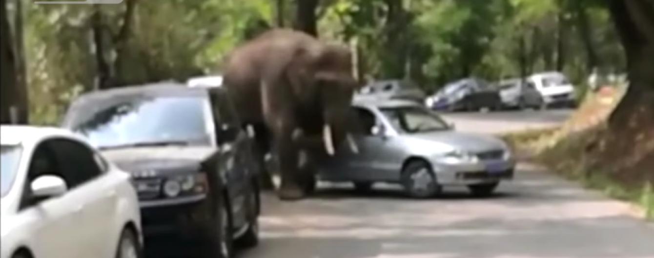 В Китае слон сбежал из заповедника и разбил 15 машин на оживленной дороге
