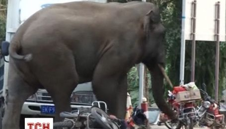 Разъяренный слон раздавил около 30 машин в Китае