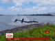 Гелікоптер із п'ятьма людьми на борту упав у воду на Гаваях