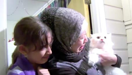 Кіт подолав півсвіту, щоб возз'єднатися з господарями-біженцями