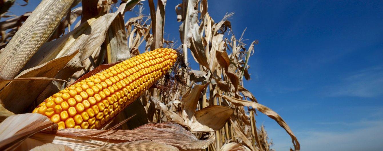 Китайский рынок наполняется украинской кукурузой, которая уже вытесняет американскую