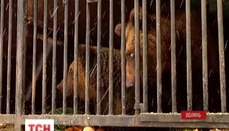Медведи из заброшенного в Ровенской области передвижного зверинца спасены