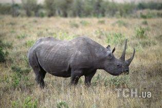 Разъяренный носорог напал на машину с туристами и начал ее таранить