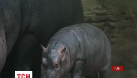 Зоопарк в Праге показал посетителям своего нового жителя