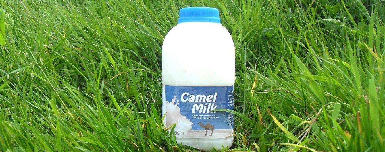 ОАЕ хочуть постачати до Києва молоко верблюдів і зняли заборону на імпорт українського м'яса