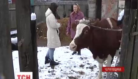 Мужчина ищет правды по судам, потому что на капоте машины оставило вмятину коровье копыто