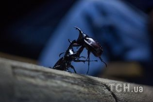 Мешканці селища на Хмельниччині б'ють на сполох через нашестя невідомих жуків