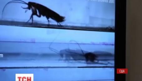 Американские инженеры разрабатывают робота-спасателя в виде таракана