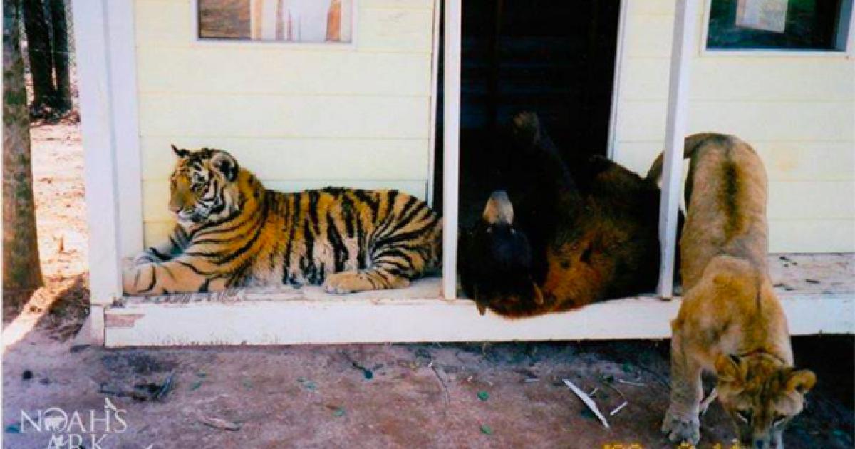 Тварин врятували ще у дитинстві.