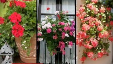 Наталя Підлісна розповіла, як правильно живцювати кімнатні рослини