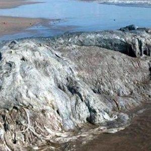 У Мексиці просто посеред пляжу знайшли невідому науці гігантську істоту