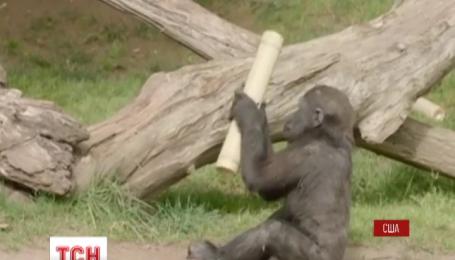 В зоопарке Сан Диего в Калифорнии отметили День рождения маленькой гориллы