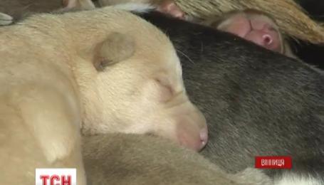 У Вінниці бабуся врятувала дворнягу з новонародженими цуценятами