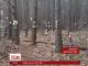Одна з лісових алей біля Львова перетворилася на треш-інсталяцію