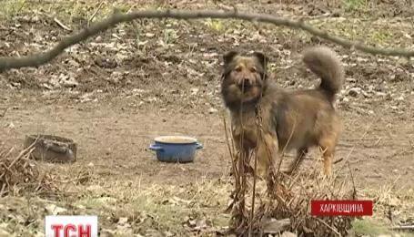 Пятерых жителей Люботина на Харьковщине покусали бродячие псы