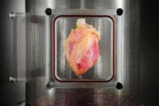 Вчені зможуть регенерувати людське серця за прикладом морських анемон