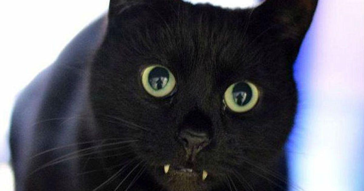 """Кішка-вампір, яка шукає родину, """"підірвала"""" Інтернет"""