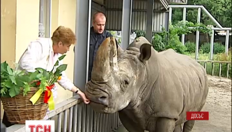 Старейший белый носорог Европы умер в Киевском зоопарке