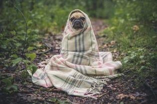 День щенка и новый трейлер фильма о Бриджит Джонс. Тренды соцсетей