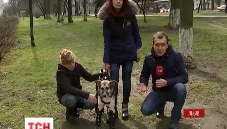 Во Львове собаку, потерявшего все четыре конечности, поставили на протезы