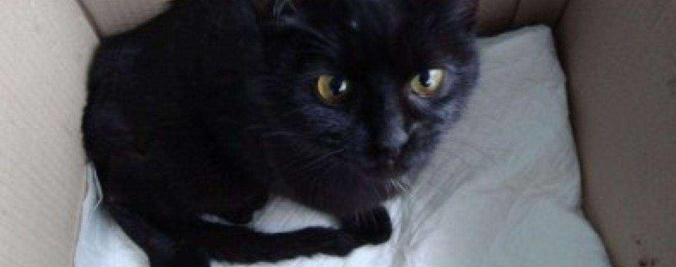 На Донеччині підлітки зґвалтували кішку і розтрощили їй лапи