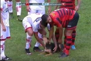 В Бразилии во время футбола пес выбежал на поле и начал забавляться с игроками