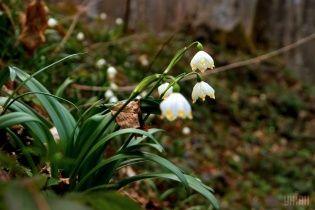 В Украине наконец обещают весенний понедельник. Прогноз погоды на 28 марта