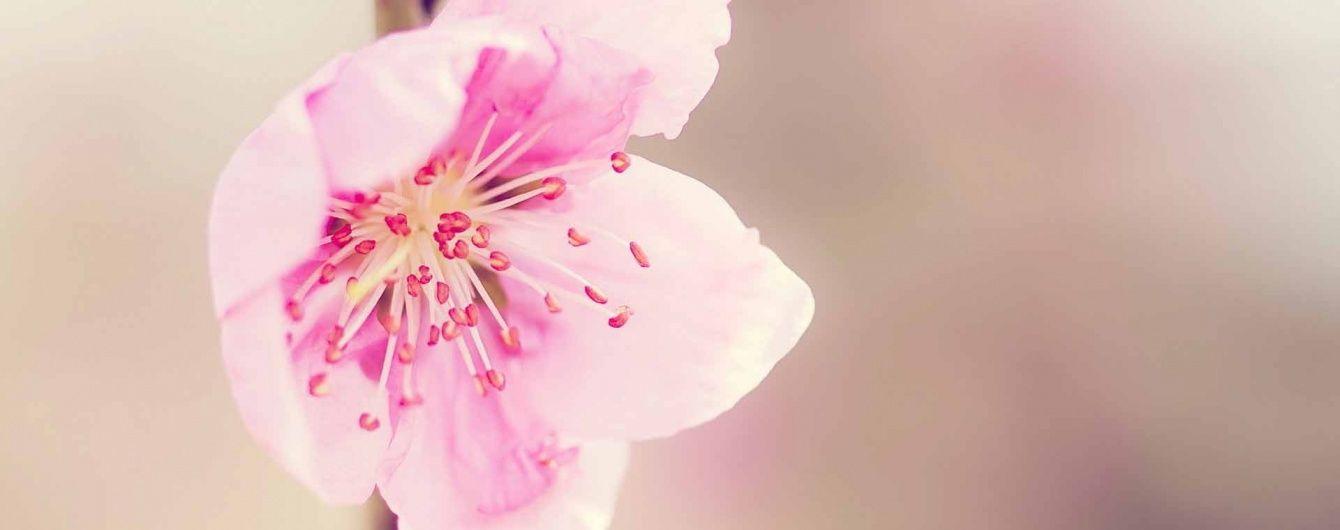 Аномально ранняя весна: на юге Одесской области зацвели абрикосы