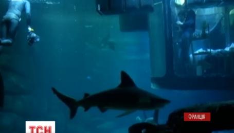 Провести ночь с акулами предложил смельчакам парижский аквариум