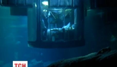 Экстремалы-романтики провели ночь с акулами в Парижском аквариуме