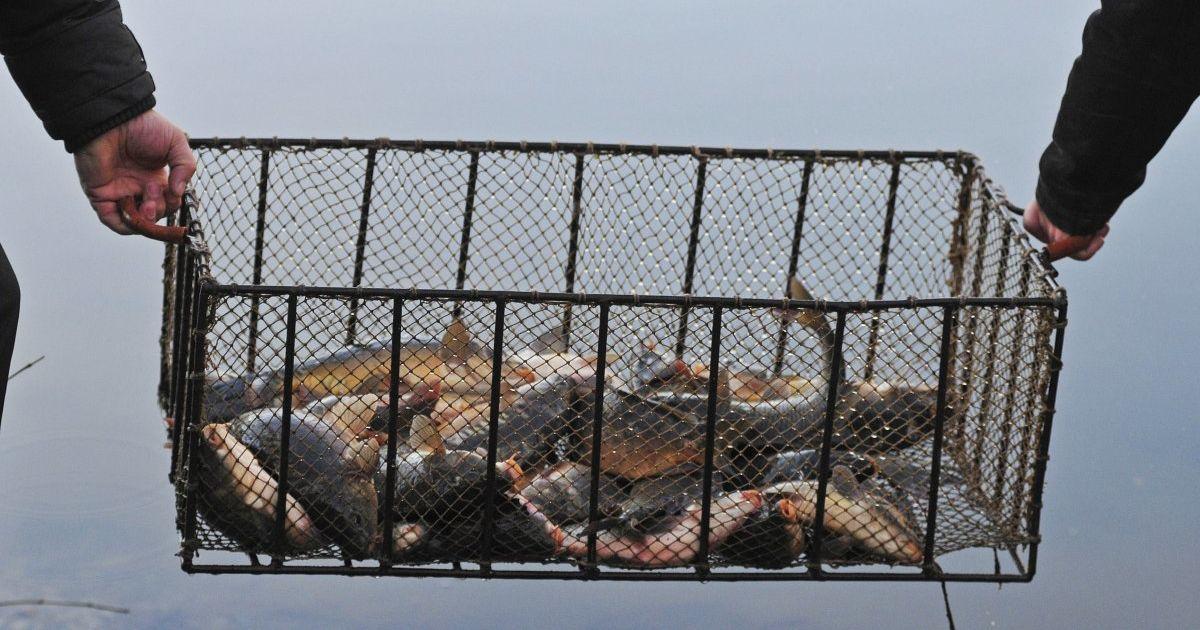 В Україні заборонили ловити рибу та нагадали про штрафи